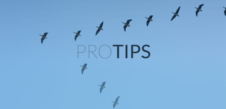 Tips for Power Users of WP Migrate DB Pro